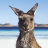 The Kangaroo Ransomware not only Encrypts your Data but tries to Lock you out of Windows Image