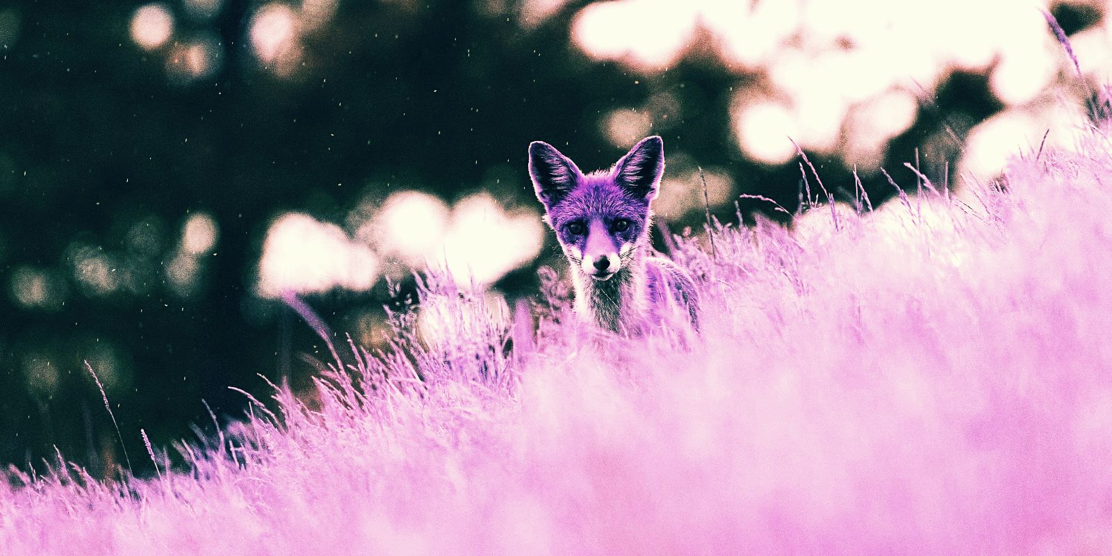 Purple Fox malware worms its way into exposed Windows systems