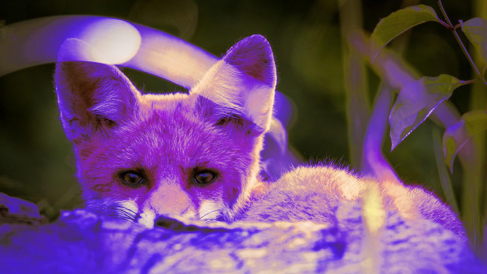 New PurpleFox botnet variant uses WebSockets for C2 communication