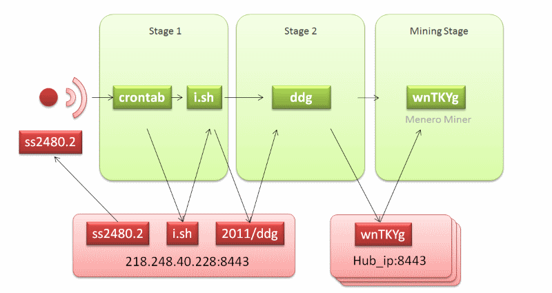 DDG infection process